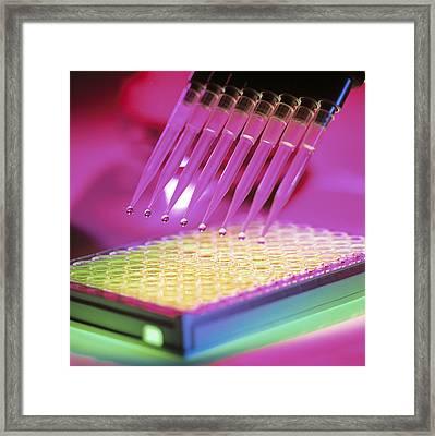 Multi-pipette Used In Blood Test Framed Print by Tek Image