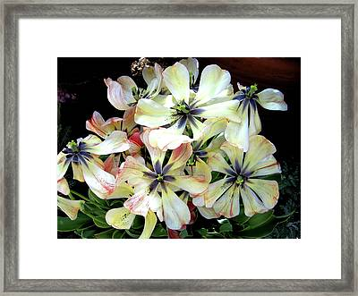 Multicolored Beauties Framed Print by Ed Golden