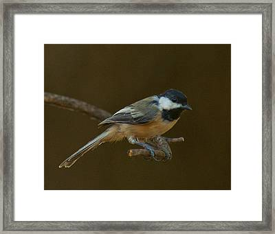 Multicolored Chickadee Framed Print by Don Wolf