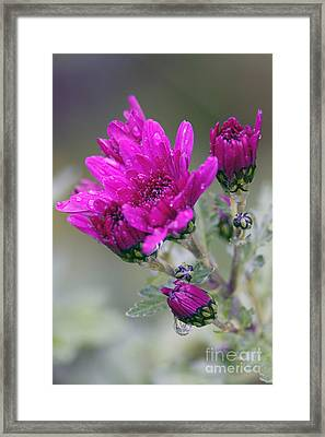 Mum With Raindrops Framed Print by Sharon Talson