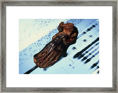 Mummified Foot Resting On Dna Autoradiograms Framed Print