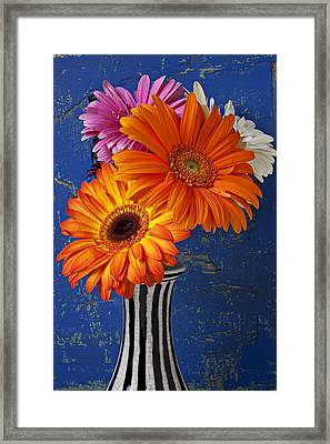 Mums In Striped Vase Framed Print by Garry Gay