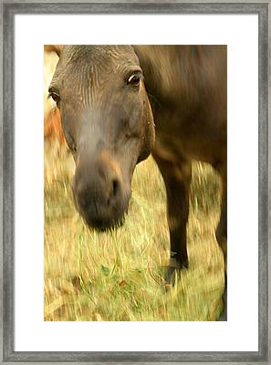 Munching Out Framed Print by Karol Livote