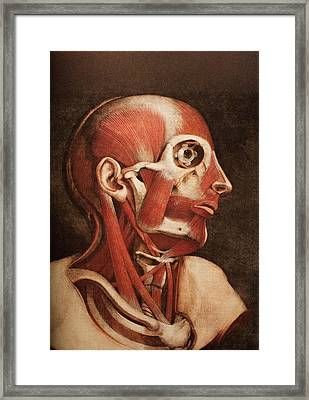 Muscles Of The Head And Neck Framed Print by Mehau Kulyk