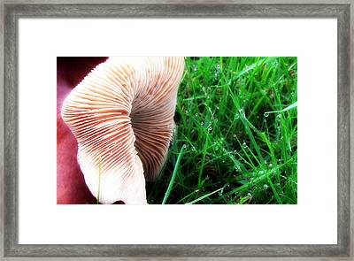 Framed Print featuring the photograph Mushroom And Dewdrops by Katie Wing Vigil