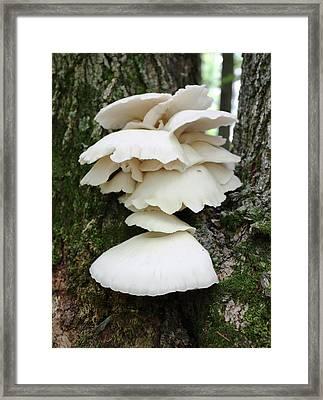 Mushroom Cluster Framed Print