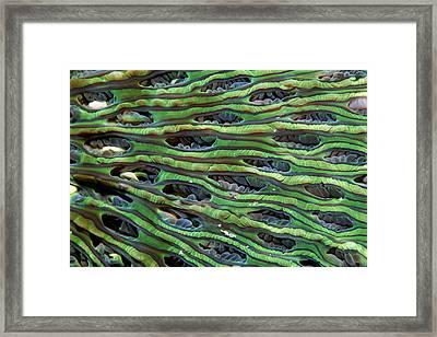 Mushroom Coral Framed Print