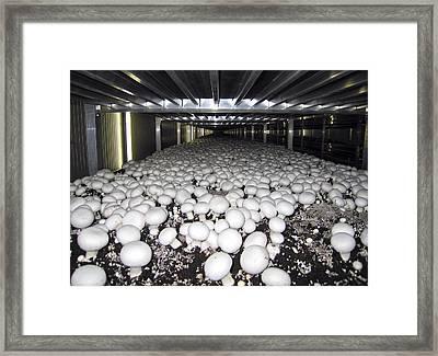 Mushroom Farming Framed Print