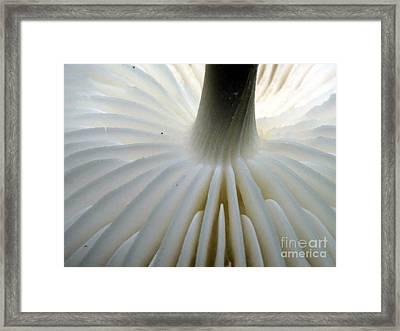 Mushroom Gills Framed Print