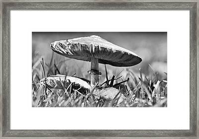 Mushroom In Black And White Framed Print