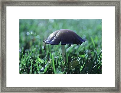 Mushroom In Morning Light Framed Print