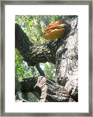 Mushroom Man Framed Print by Juliana  Blessington