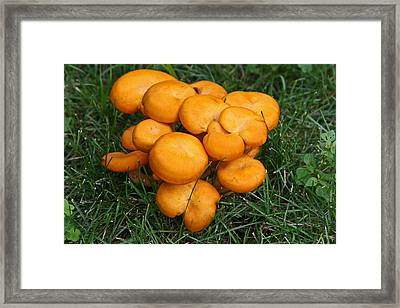 Mushroom Salad Framed Print by Kenric A Prescott