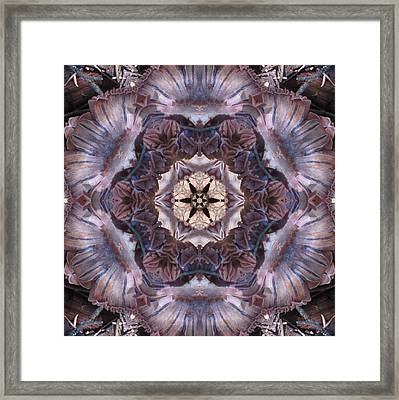 Mushroom With Star Center Framed Print