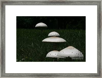 Framed Print featuring the photograph Mushrooms On The March by Joan McArthur