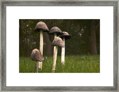 Mushrooms With Tall Stems Growing In Framed Print