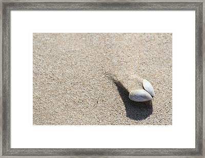 Mussel And Sand Drift Framed Print