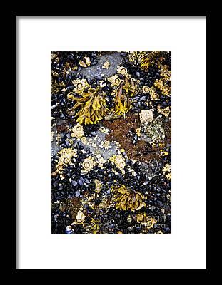 Barnacles Framed Prints
