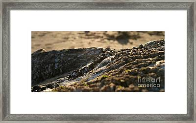 Mussels Sunset Framed Print