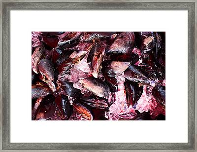 Mussels Framed Print by Tanya Harrison