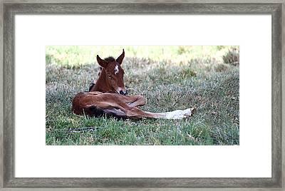 Mustang Filly Framed Print by Elizabeth Hart
