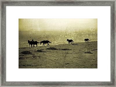 Mustangs Framed Print
