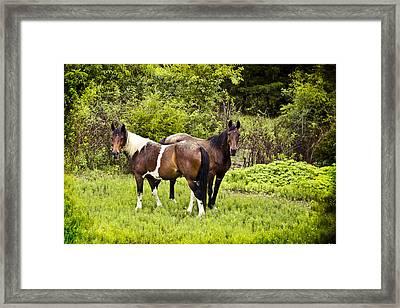 Mustangs Framed Print by Elizabeth Wilson