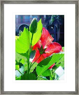 Framed Print featuring the photograph My Backside by Frank Wickham