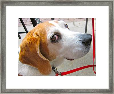 My Beagle Friend Framed Print