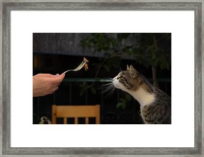 My Best Most Beloved Cat Framed Print