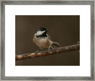My Best Side Framed Print by Don Wolf