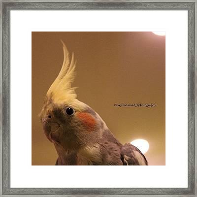 My Bird 🐦 #pop #page #popular Framed Print