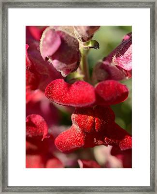 Framed Print featuring the photograph My Bleeding Heart by Tanya Tanski