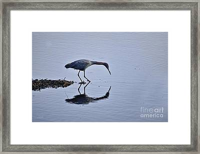 My Blue Reflection Framed Print by Diego Re