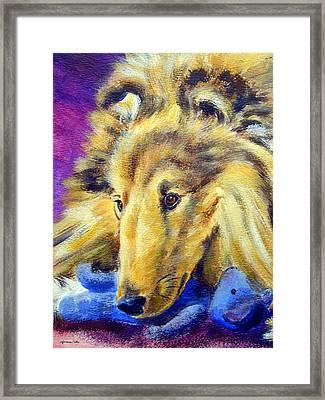 My Blue Teddy - Shetland Sheepdog Framed Print by Lyn Cook