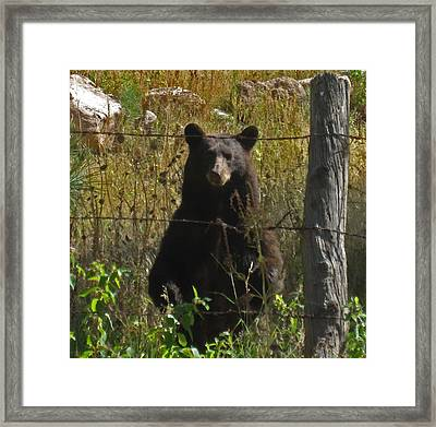 My Capture In Beulah Today Framed Print