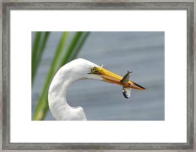 My Catch Framed Print by Kathy Gibbons