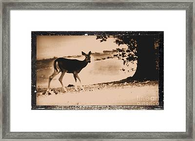 My Dear What Big Eyes You Have Framed Print by Marsha Heiken