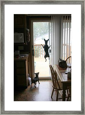My Dog Can Fly Or Levitating Dog Framed Print