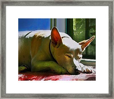 My Dog Mike Framed Print by Debra Collins