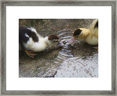 Framed Print featuring the photograph My Ducks by Bogdan Floridana Oana