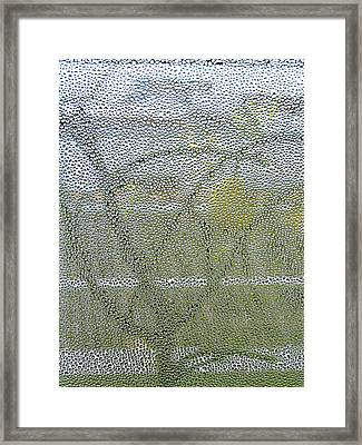 My Father's Lemon Tree Framed Print by Guadalupe Nicole Barrionuevo