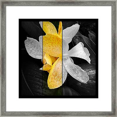 My Favorite Framed Print by Chasity Johnson