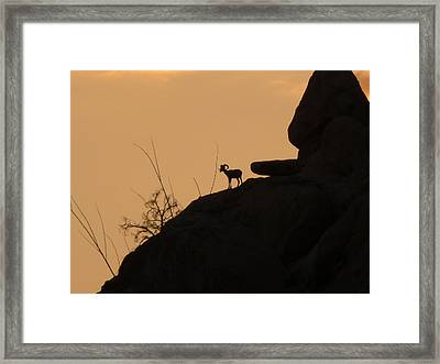 My Friend At Sunset I Framed Print by Carolina Liechtenstein