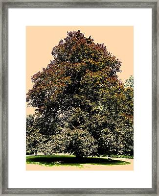 My Friend The Tree Framed Print by Juergen Weiss