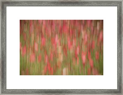 My Front Yard-1 Framed Print by David Coblitz