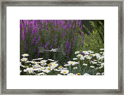 My Garden 1 Framed Print by Michel DesRoches