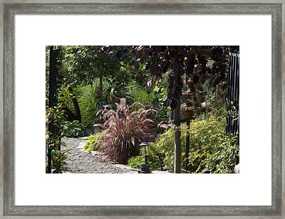 My Garden 6 Framed Print by Michel DesRoches