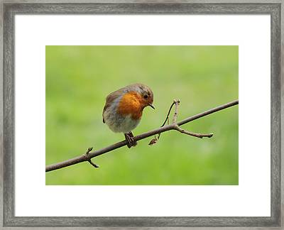 My Garden Pal Framed Print