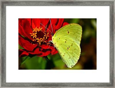My Golden Wings.... Framed Print by Tanya Tanski